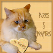Please purr for Dr Tweety and his family