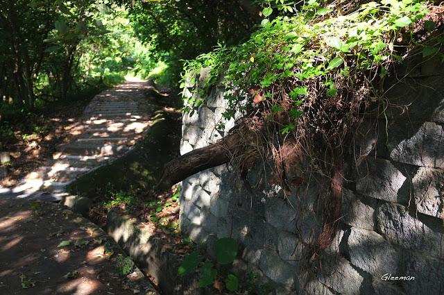 雞南山,自從上次颱風過後,有些斷樹殘枝橫在邊坡或頭上,經過時請小心注意。