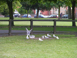 Seagulls. Common in coastal towns
