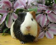 Las Imagenes De Animales Mas Tiernas =D · December 31