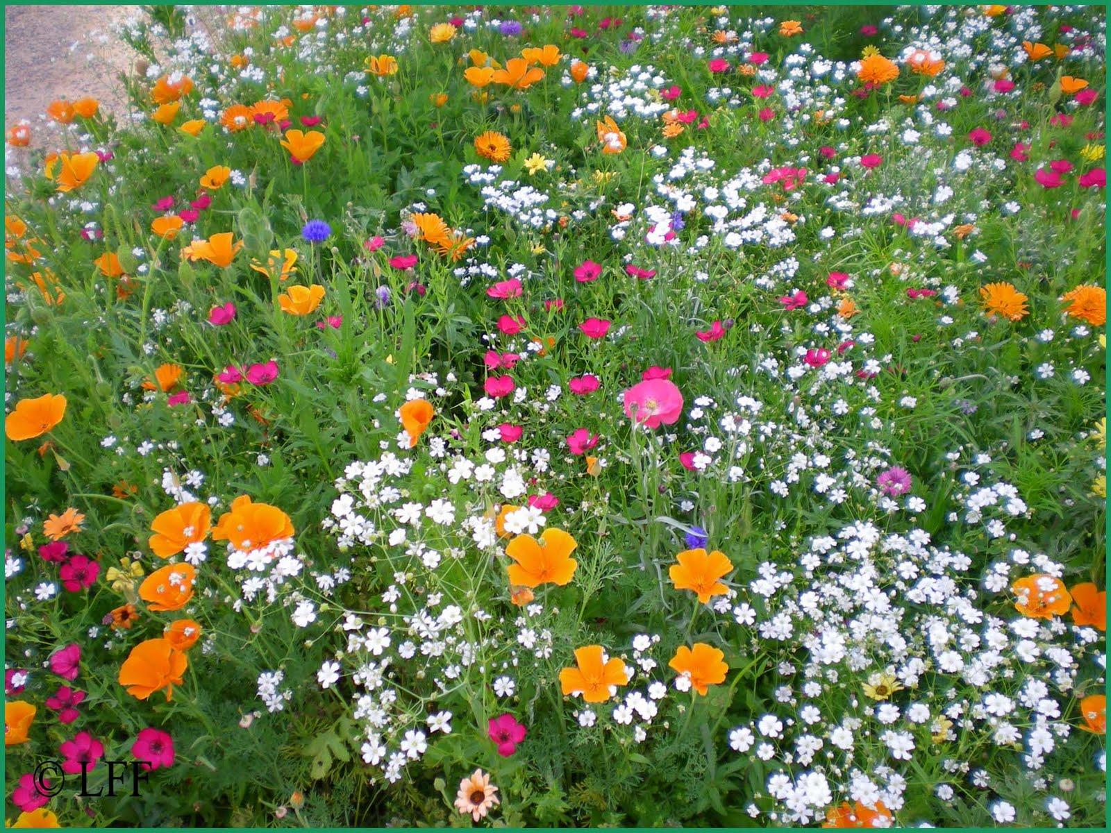 Pensando Jardines: PRADO SILVESTRE