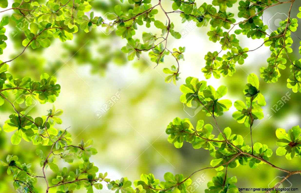 Summer Or Spring Nature Concept Stock Photo Picture And Royalty