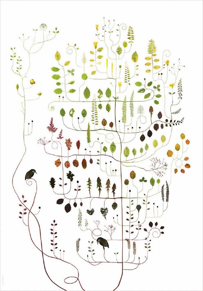 Lotta's Trees – Lotta Olsson