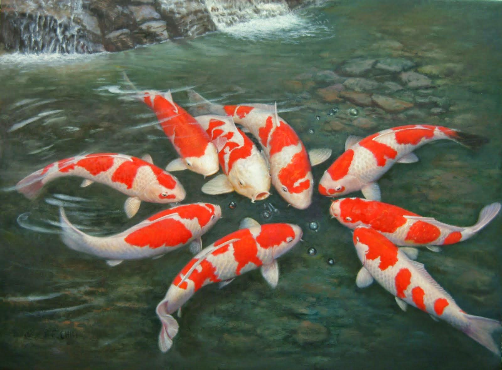 Cá Chép Kiểng