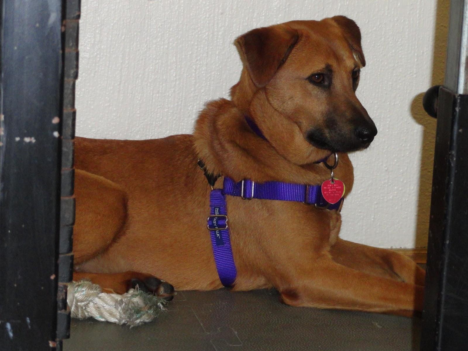 K Dog Training Hatfield Facebook