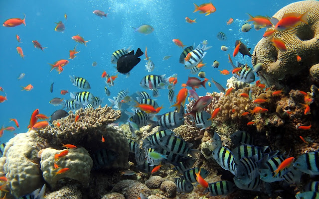 أجمل 10 أسماك ملونة في عالم البحار '' بالصور '' Animals_Under_water_