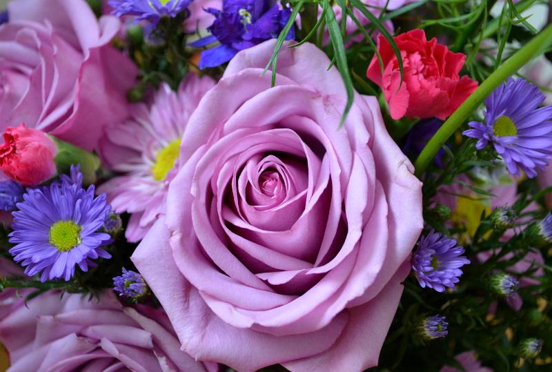 cozy birdhouse | purple roses