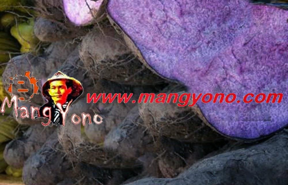 Uwi atau ubi kelapa tanaman yang terlupakan