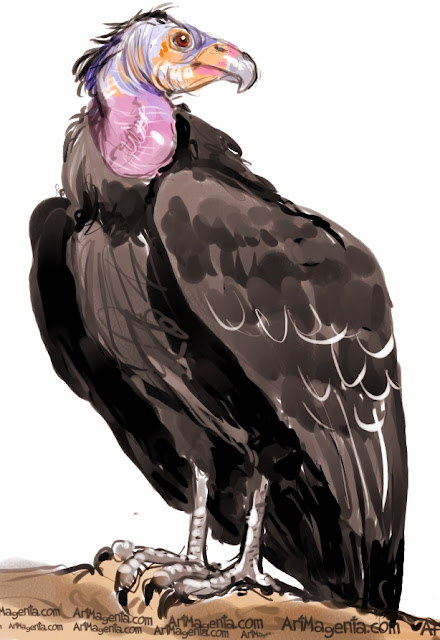 California Condor sketch painting. Bird art drawing by illustrator Artmagenta