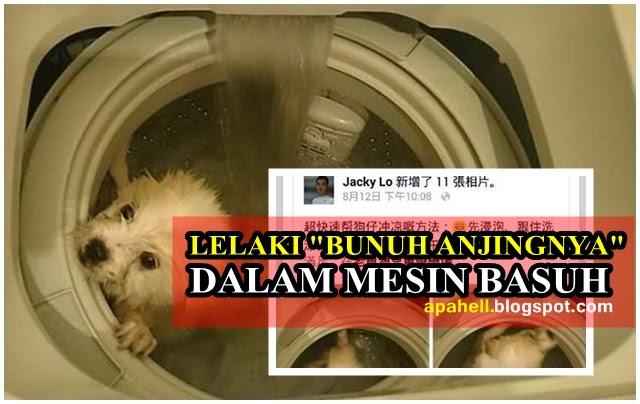Tak Berperikemanusian Lelaki Lemaskan Anjing Dalam Mesin Basuh di Hong Kong 5 Foto Gambar