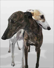 My Greyhound Blog