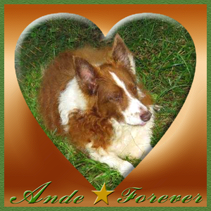 Run free and happy Ande