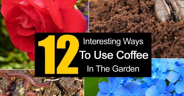 12 interesting ways to use coffee in the garden idees - What to do with mustard five unknown uses ...