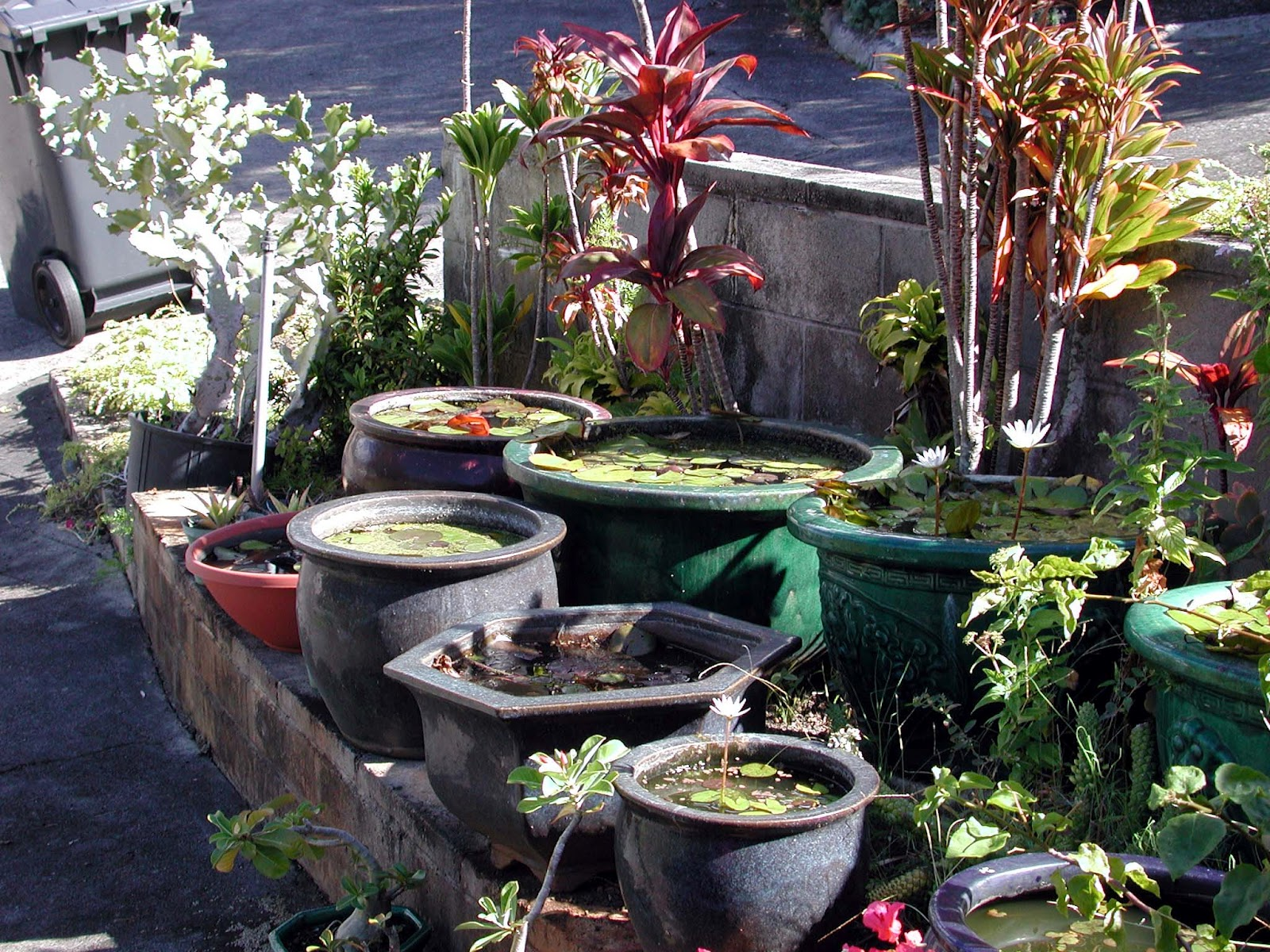 Container water gardens for The water garden