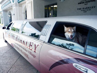 巴克利豪華寵物酒店 寵物
