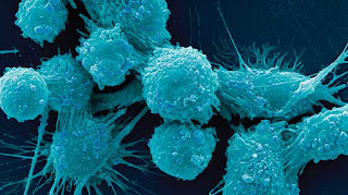 Promising Drugs Turn Immune System On Cancer