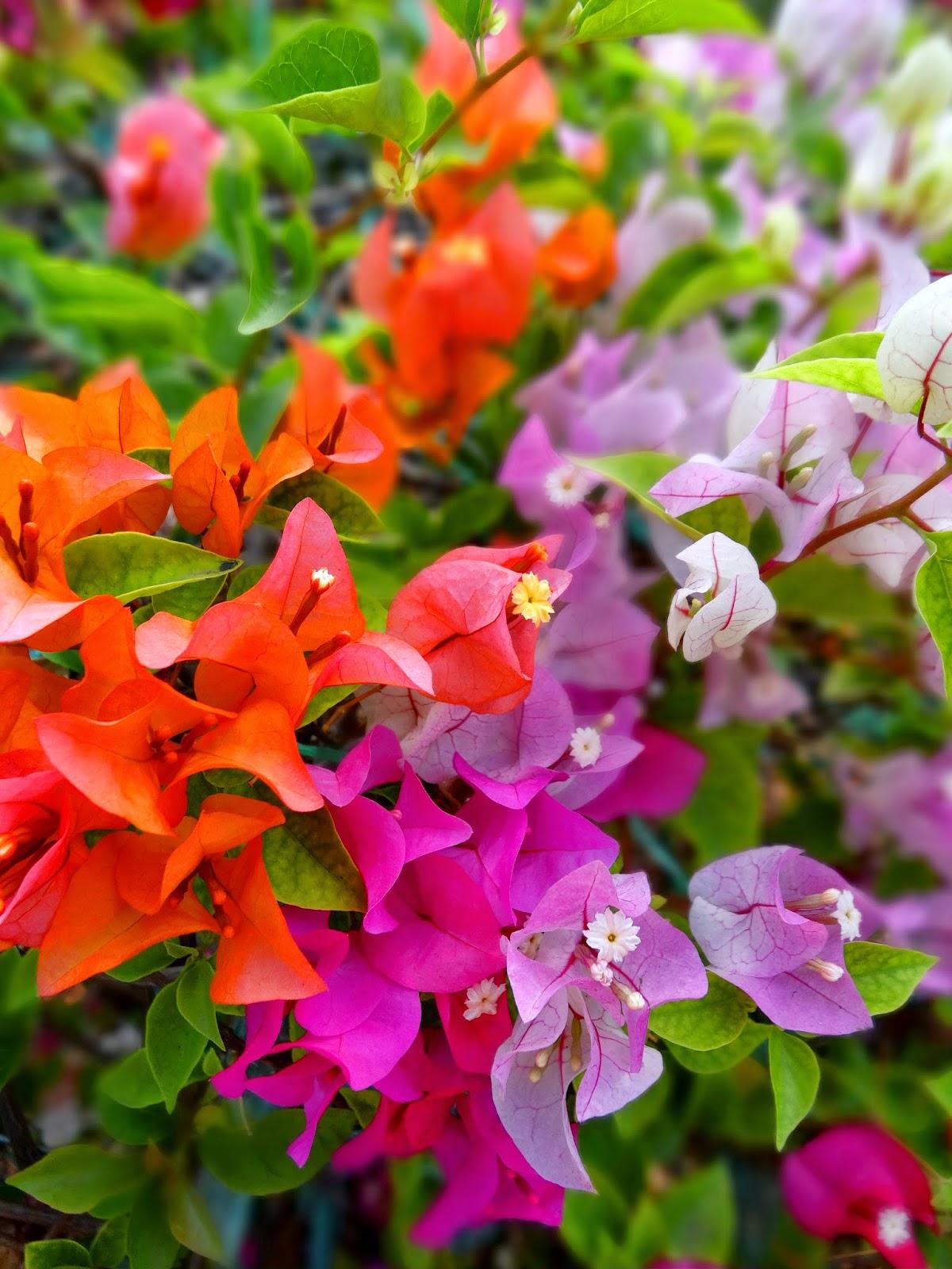 The estetic of senses tha lande culture de for Savoir jardiner