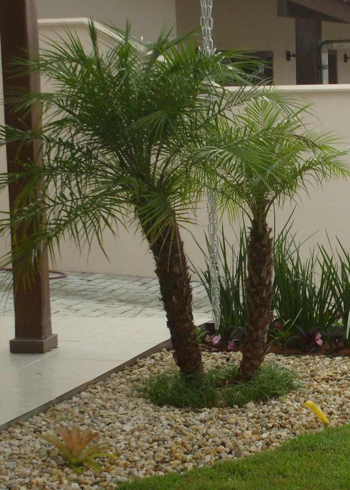 franz jardinagem e paisagismo a beleza das palmeiras
