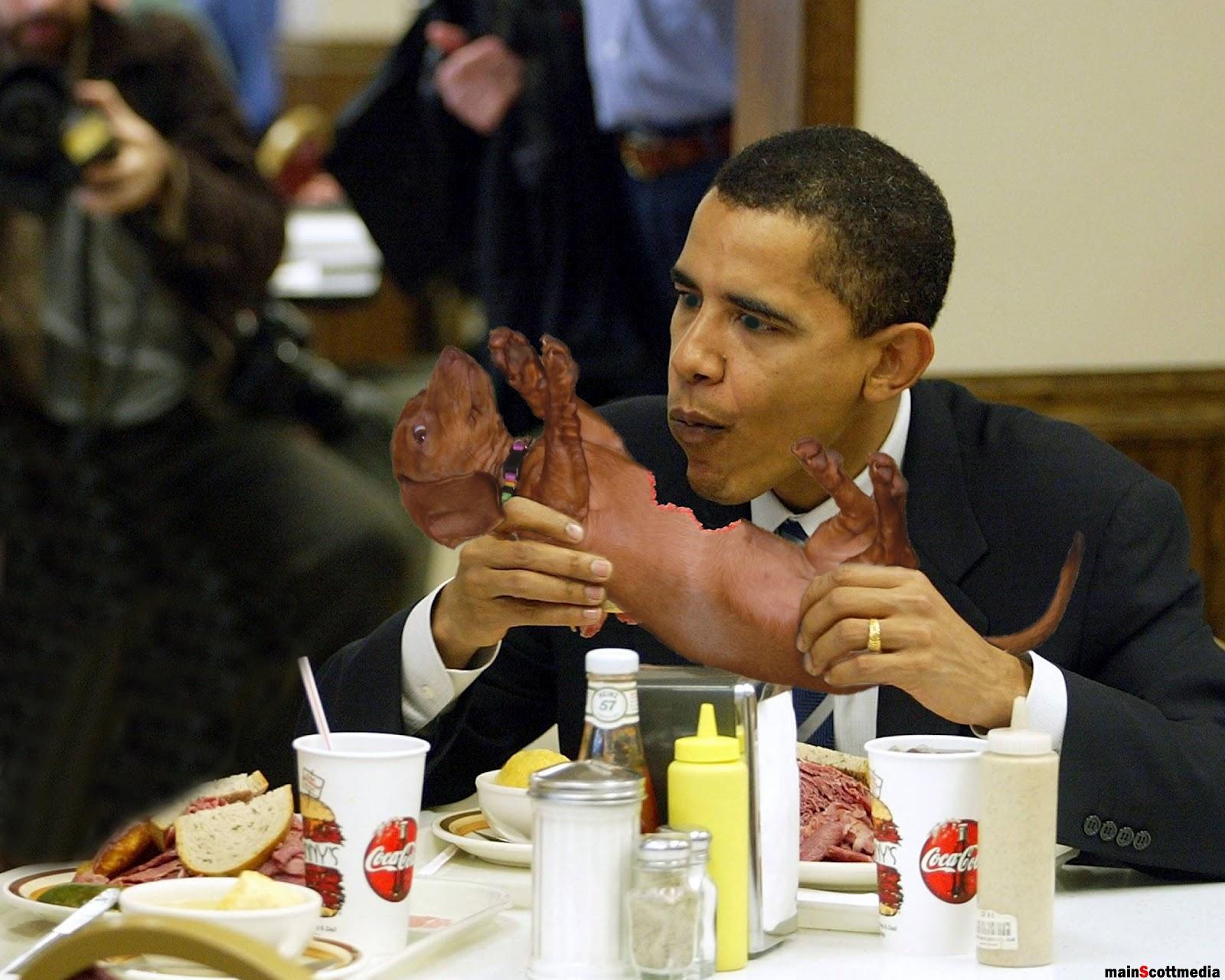 Image Result For Obama Dog
