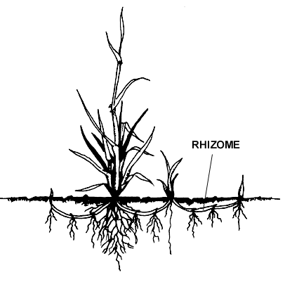 an introduction to the history of horizontal gene transmission 72 selected forintensive research because of their ease of handling, the likelihood of producing rapid results, and their accessibility to existing research methodologies, their role in horizontal gene trans-.
