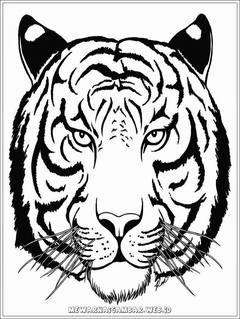 Gambar Sketsa Binatang Kepala Harimau