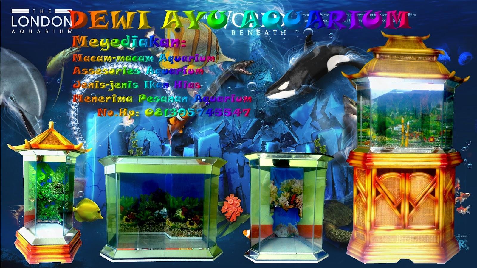 ... jenis ikan hias air tawar, aksesoris akuarium & macam-macam akuarium