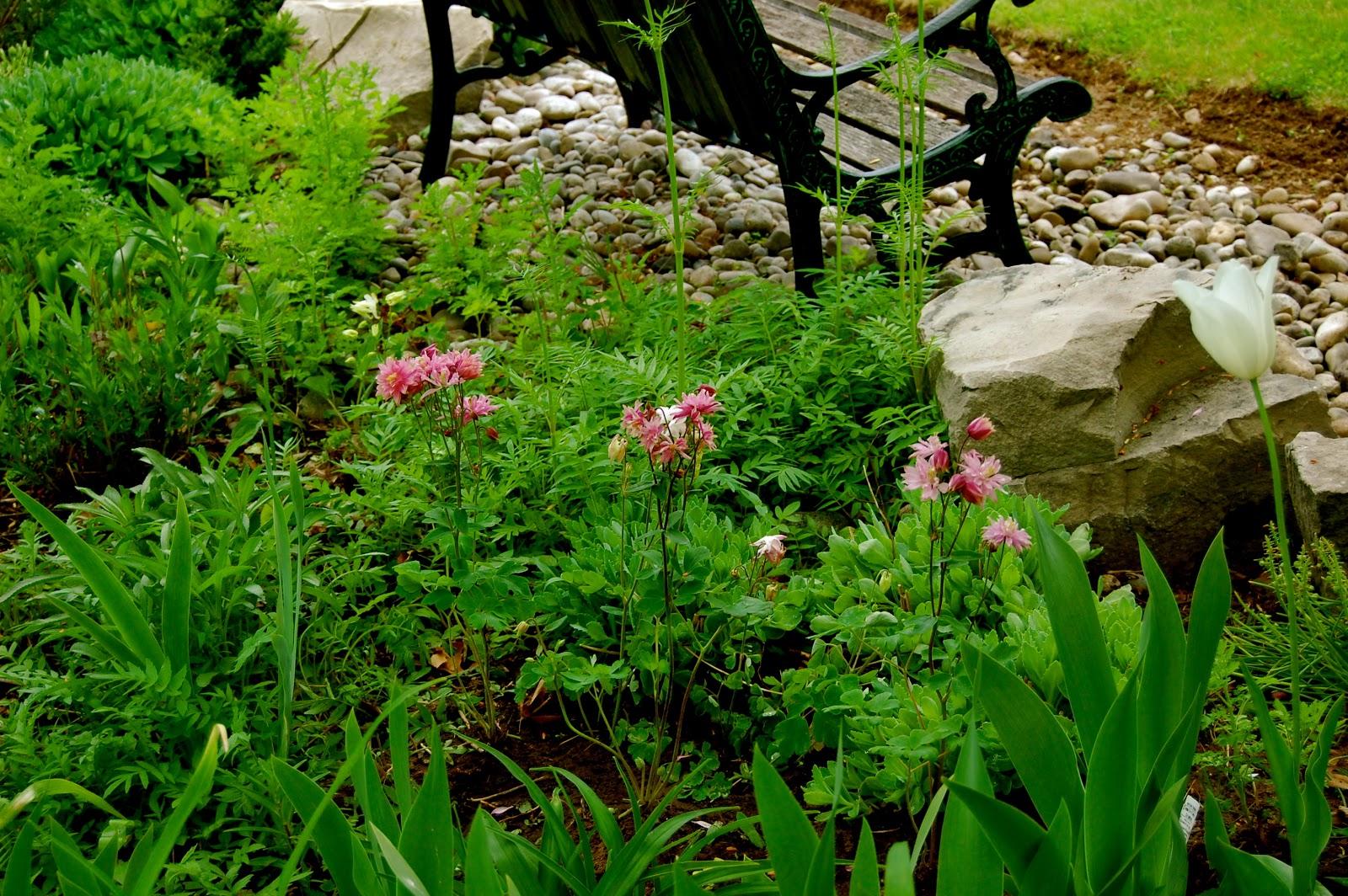 Astrids Garden Design Top Perennials Part 1 Of Many