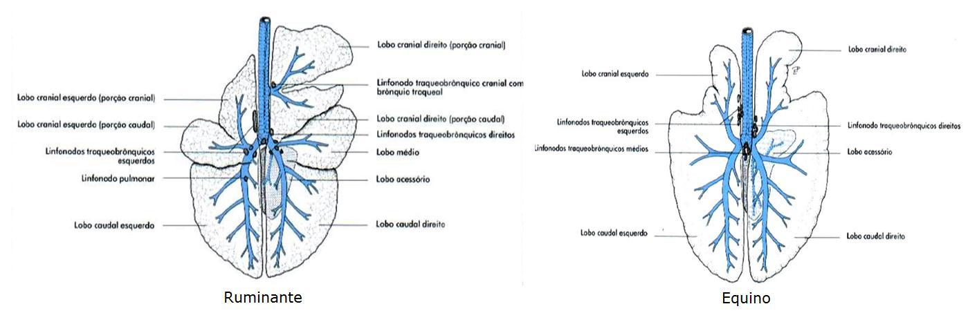 Excelente Anatomía Gris Lobo Imágenes - Imágenes de Anatomía Humana ...