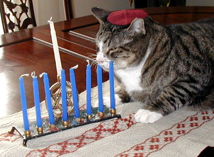 Happy Hanukkah Images >> 25 cats and dogs admiring their Menorahs | Jewish Telegraphic Agency