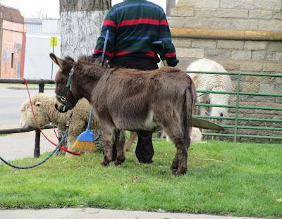 Donkey, Lamb and Llama