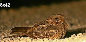 Ornitología en Cádiz