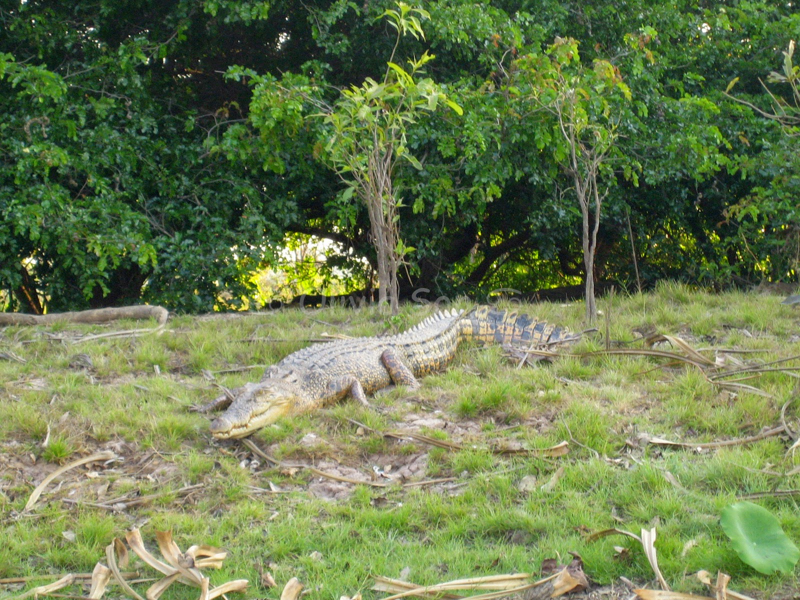 Crocodile, Kakadu National Park, Northern Territory, Australie