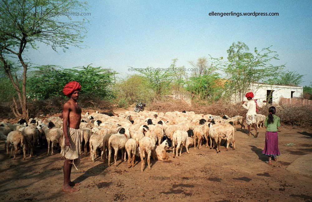 pastoral communities in india Indian grassland and fodder research institute, jhansi, up, india wwwigfrires in keywords: grazing land, pastoralism, nomadic pastoralism, grazing.