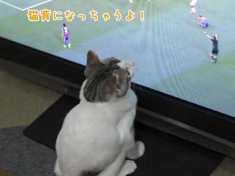 猫背過ぎる子猫