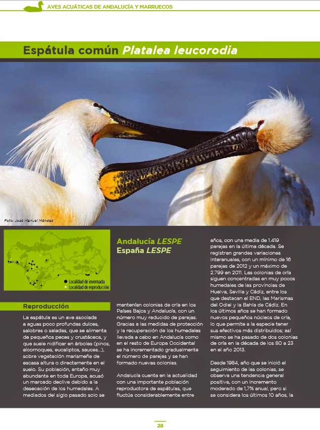 http://www.juntadeandalucia.es/medioambiente/portal_web/web/temas_ambientales/programas_europeos_y_relac_internac/programas_europeos/cooperacion_transfronteriza/espana_fronteras_ext_poctefex/proyectos_ejecucion/transhabitat/proyecto_transhabitat/avances/Aves_acuaticas_baja_ESP.pdf