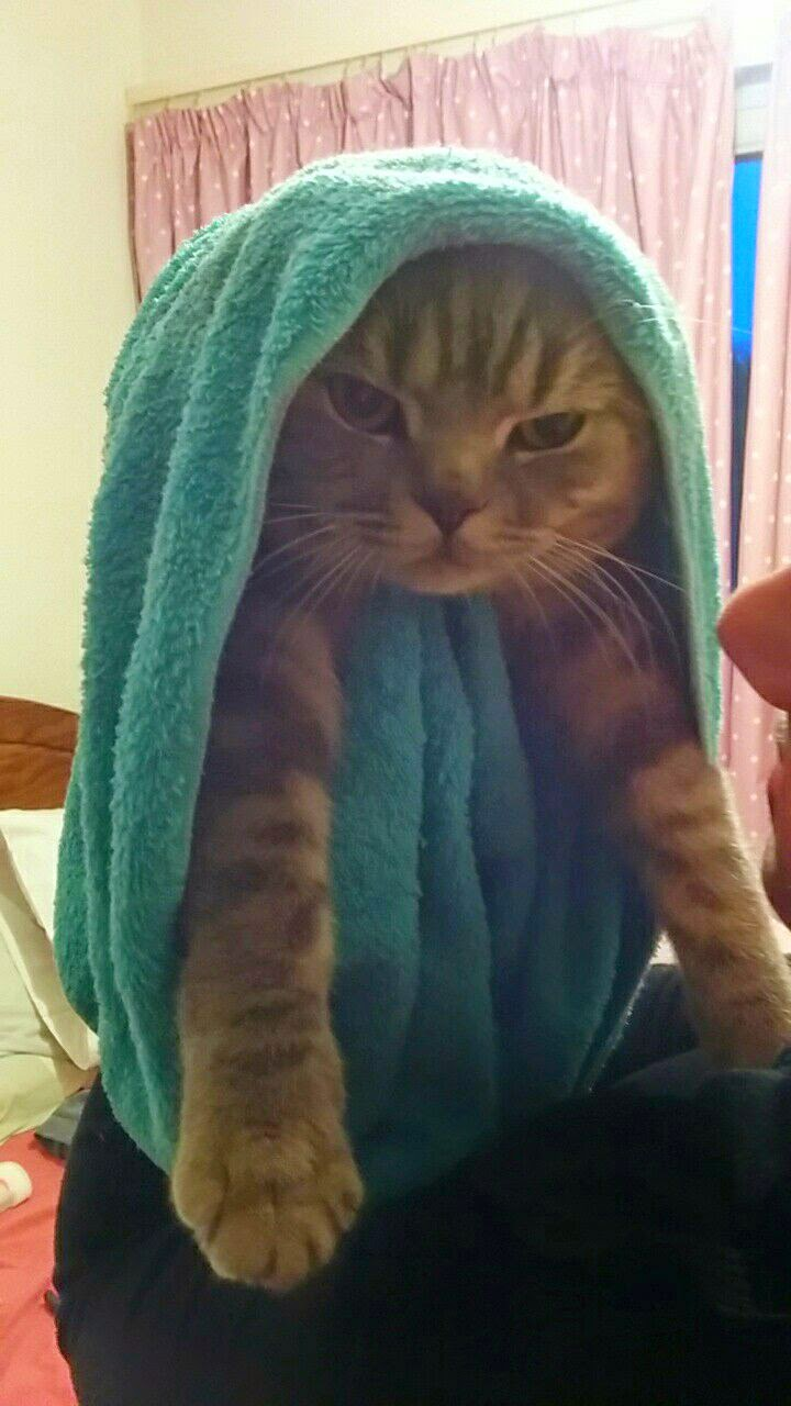 Funny cats - part 126 (40 pics + 10 gifs), cute cat pictures, funny cat