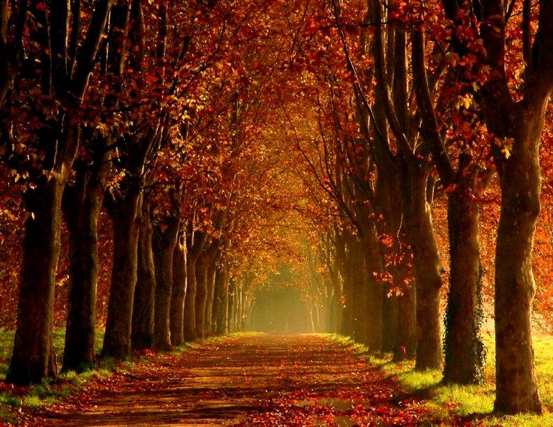 Luna plateada las hojas caen en oto o for Arboles que no se le caen las hojas en invierno