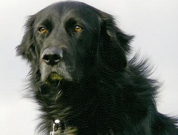 Zypernhund Alfie