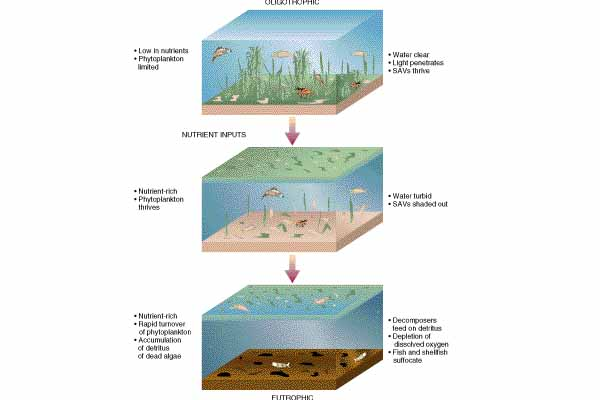 greenpeace the difference between oligotrophic waters and