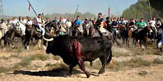 toro de la vega, tordesillas, valladolid, españa, toro