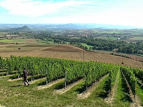 Les vignes de Boudes - Photo JM