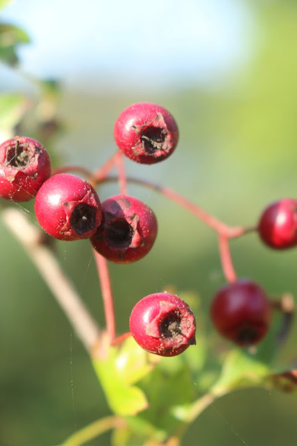 Photo Diary: Autumn photography woods berries