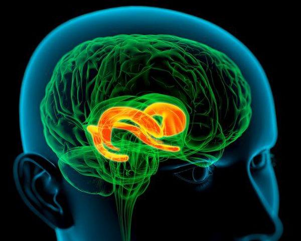 Ручной тормоз в нашей голове: поясная извилина и когнитивная гибкость.