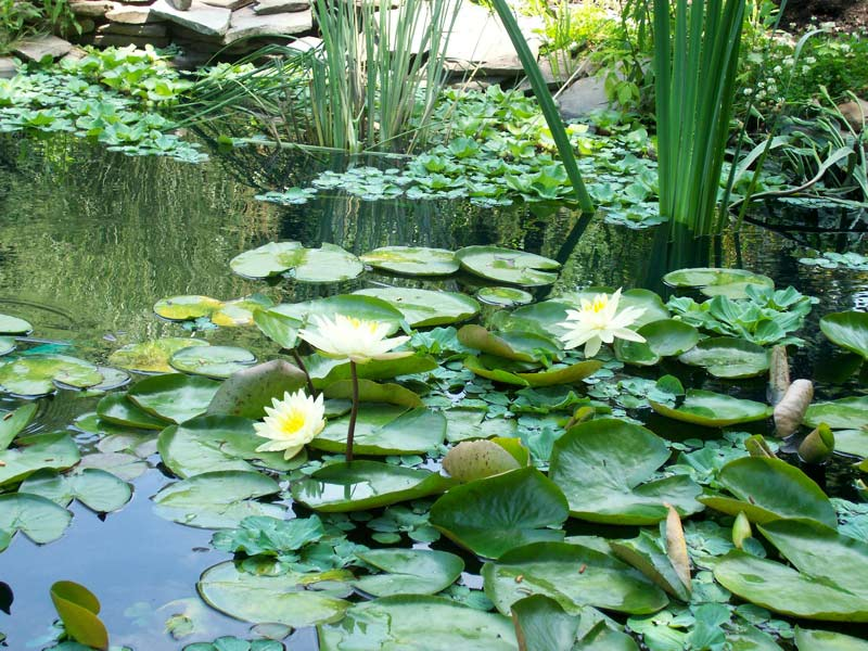 Pond ecology for Plants that live in a pond