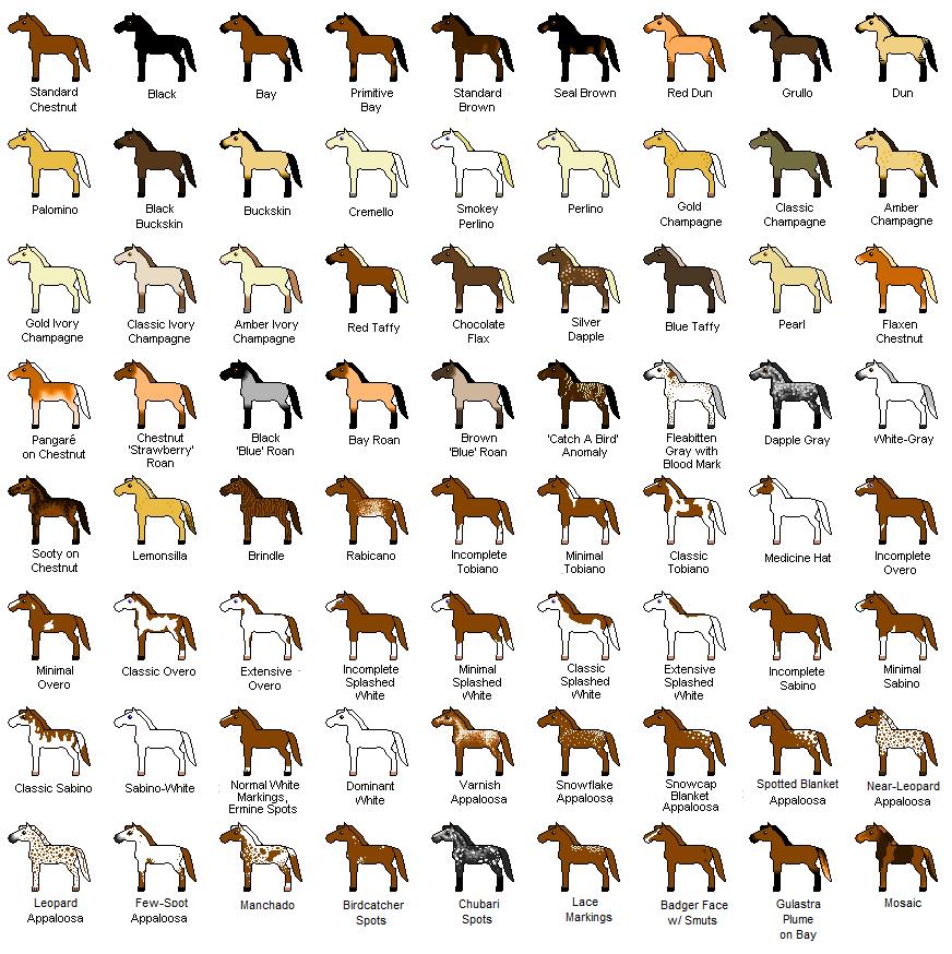 Y Horse Names lockwood horses: horse...