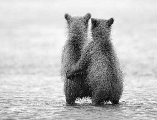 Urso abraçando