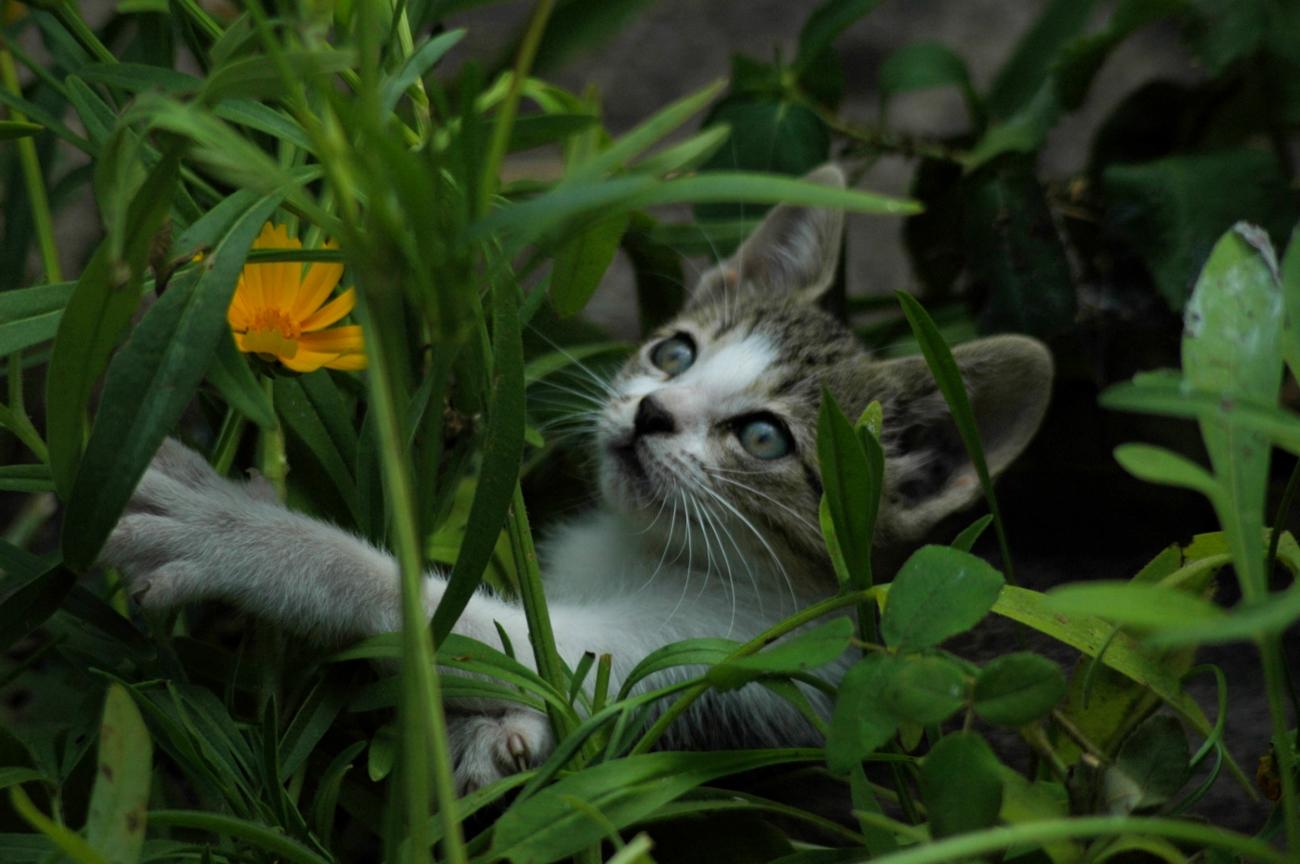 Chove c es e gatos plantas t xicas for Plantas toxicas gatos