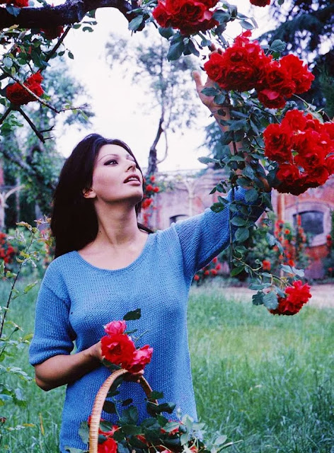 Romantic Florals Sophia Loren  by Cool Chic Style Fashion