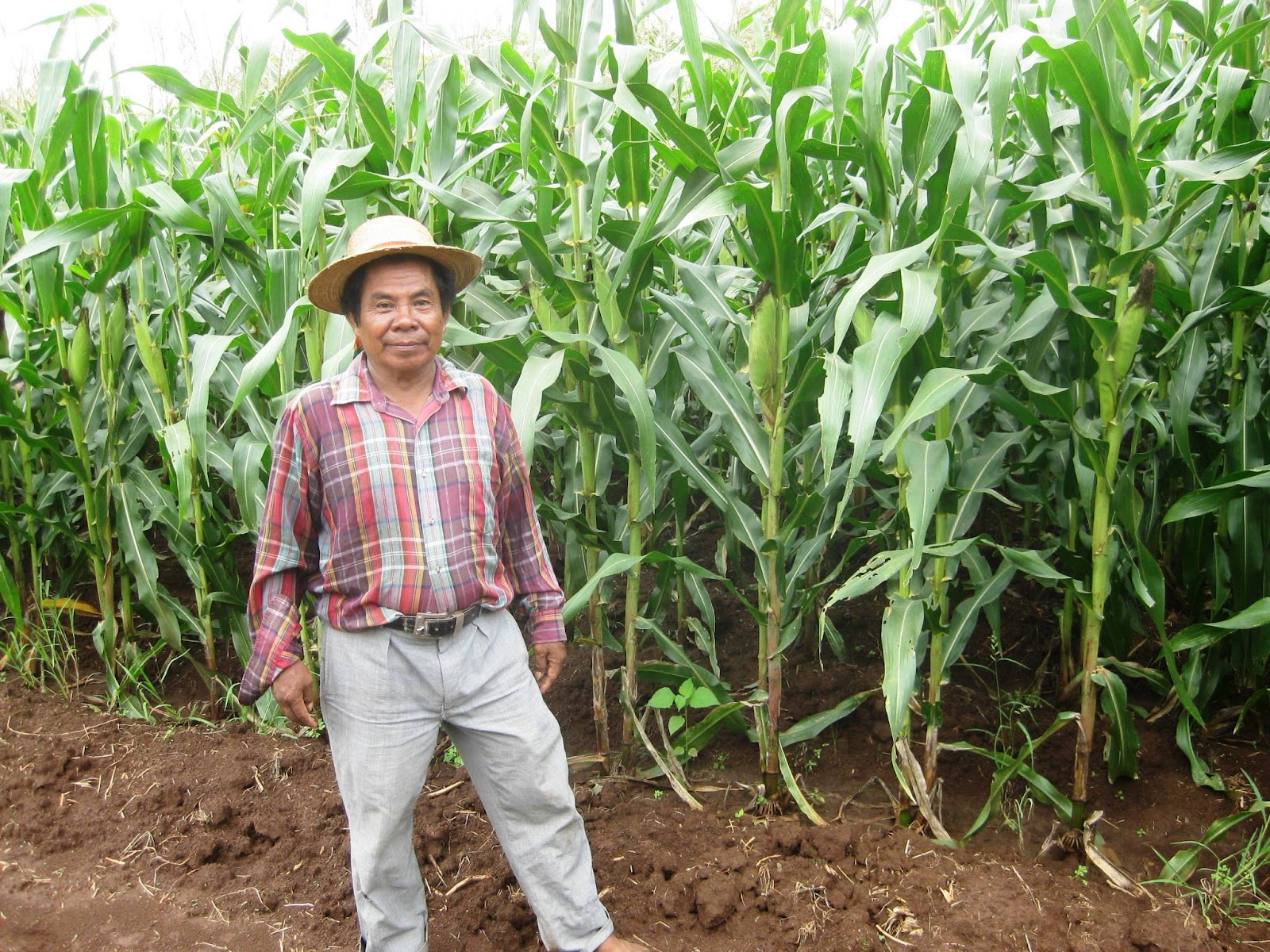 semilla nueva semilla nueva growing better ideas for a better ciriaco now grows corn sesame jalapenos and cashews on his five acre plot in willywood he is an enthusiastic participant in semilla nueva meetings and