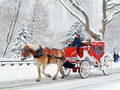 Horse and Carriage Rides in Central Park